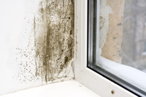 full home inspection - mold in a home